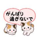 ハート伝える 三毛猫ツインズ(個別スタンプ:24)