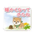 優しい春 よちよち豆柴(個別スタンプ:1)