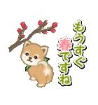 優しい春 よちよち豆柴(個別スタンプ:2)