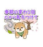 優しい春 よちよち豆柴(個別スタンプ:8)