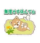 優しい春 よちよち豆柴(個別スタンプ:16)