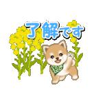 優しい春 よちよち豆柴(個別スタンプ:23)