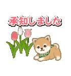 優しい春 よちよち豆柴(個別スタンプ:24)