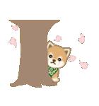 優しい春 よちよち豆柴(個別スタンプ:25)