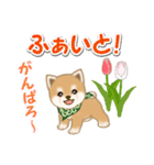 優しい春 よちよち豆柴(個別スタンプ:29)