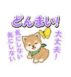 優しい春 よちよち豆柴(個別スタンプ:31)