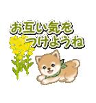 優しい春 よちよち豆柴(個別スタンプ:32)