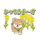 優しい春 よちよち豆柴(個別スタンプ:33)