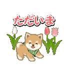 優しい春 よちよち豆柴(個別スタンプ:35)