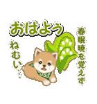 優しい春 よちよち豆柴(個別スタンプ:38)