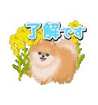 優しい春 ふわふわポメちゃん(個別スタンプ:23)