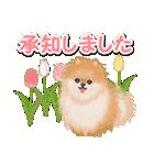 優しい春 ふわふわポメちゃん(個別スタンプ:24)