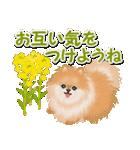 優しい春 ふわふわポメちゃん(個別スタンプ:32)