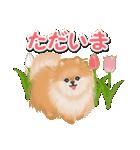 優しい春 ふわふわポメちゃん(個別スタンプ:35)