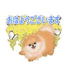 優しい春 ふわふわポメちゃん(個別スタンプ:37)