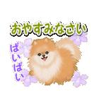 優しい春 ふわふわポメちゃん(個別スタンプ:40)