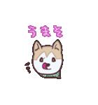 むぎ(special)/わんこと車中泊公式スタンプ(個別スタンプ:10)