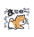 陽気で元気な柴犬(個別スタンプ:12)