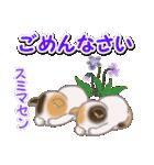 春の三毛猫ツインズ(個別スタンプ:24)