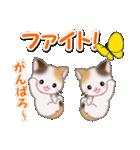 春の三毛猫ツインズ(個別スタンプ:25)