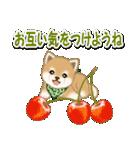 よちよち豆柴 おいしい春(個別スタンプ:28)