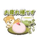 赤ちゃん豆柴 毎日使うスタンプ(個別スタンプ:13)