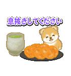 赤ちゃん豆柴 毎日使うスタンプ(個別スタンプ:15)