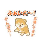 赤ちゃん豆柴 毎日使うスタンプ(個別スタンプ:29)