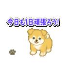 ちびもふ秋田犬 毎日使うスタンプ(個別スタンプ:5)