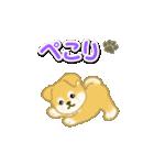 ちびもふ秋田犬 毎日使うスタンプ(個別スタンプ:19)