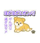 ちびもふ秋田犬 毎日使うスタンプ(個別スタンプ:32)