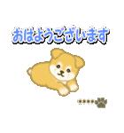 ちびもふ秋田犬【カスタム版】(個別スタンプ:1)