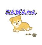 ちびもふ秋田犬【カスタム版】(個別スタンプ:4)