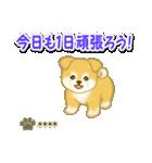 ちびもふ秋田犬【カスタム版】(個別スタンプ:5)
