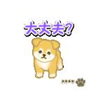 ちびもふ秋田犬【カスタム版】(個別スタンプ:26)