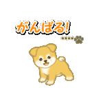 ちびもふ秋田犬【カスタム版】(個別スタンプ:31)