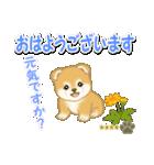 赤ちゃん豆柴 【カスタム版】(個別スタンプ:1)