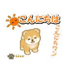 赤ちゃん豆柴 【カスタム版】(個別スタンプ:3)