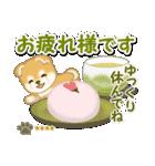 赤ちゃん豆柴 【カスタム版】(個別スタンプ:13)
