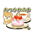 赤ちゃん豆柴 【カスタム版】(個別スタンプ:14)