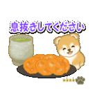 赤ちゃん豆柴 【カスタム版】(個別スタンプ:15)