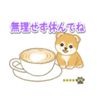 赤ちゃん豆柴 【カスタム版】(個別スタンプ:16)