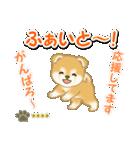 赤ちゃん豆柴 【カスタム版】(個別スタンプ:29)