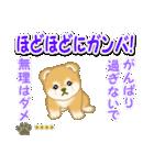赤ちゃん豆柴 【カスタム版】(個別スタンプ:30)