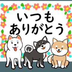 [LINEスタンプ] 柴犬の見やすい文字スタンプ