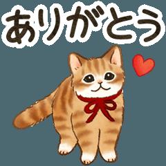 [LINEスタンプ] 気持ち伝える☆猫たちのスタンプ