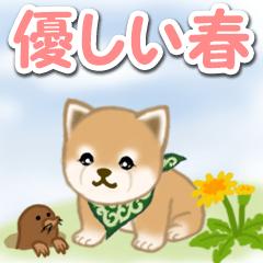 [LINEスタンプ] 優しい春 よちよち豆柴