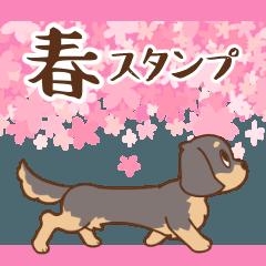 [LINEスタンプ] ダックス大好き季節・春◆黒タン
