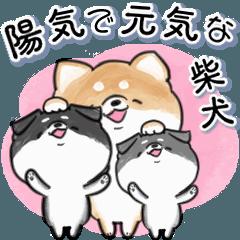[LINEスタンプ] 陽気で元気な柴犬