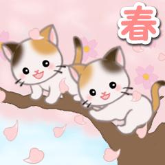 [LINEスタンプ] 春の三毛猫ツインズ